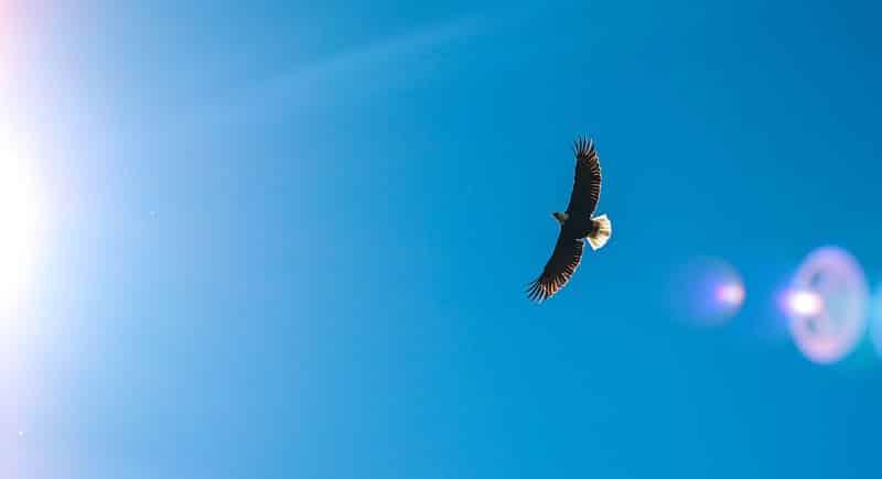 Van bang vogeltje naar adelaar